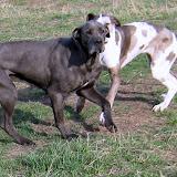 Savanna & Sofia