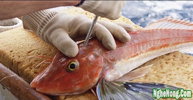 Nghệ thuật bảo quản cá của ngư dân Nhật Bản - 2