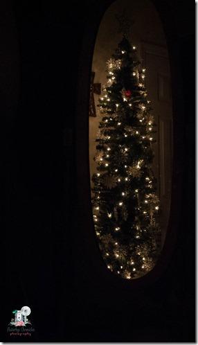 Christmas trees-3