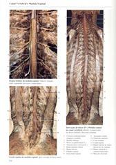 216 Canal Vertebral e Medula Espinal