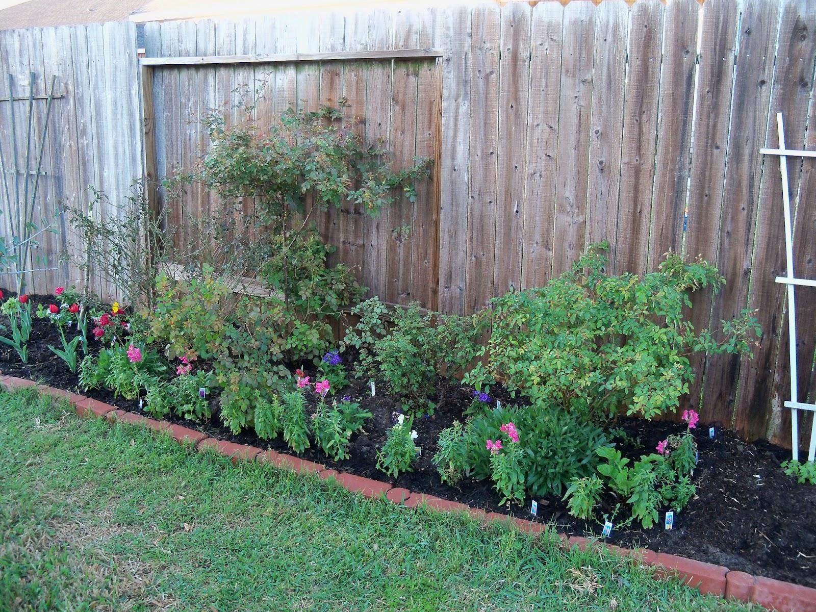 Gardening 2011 - 100_6731.JPG