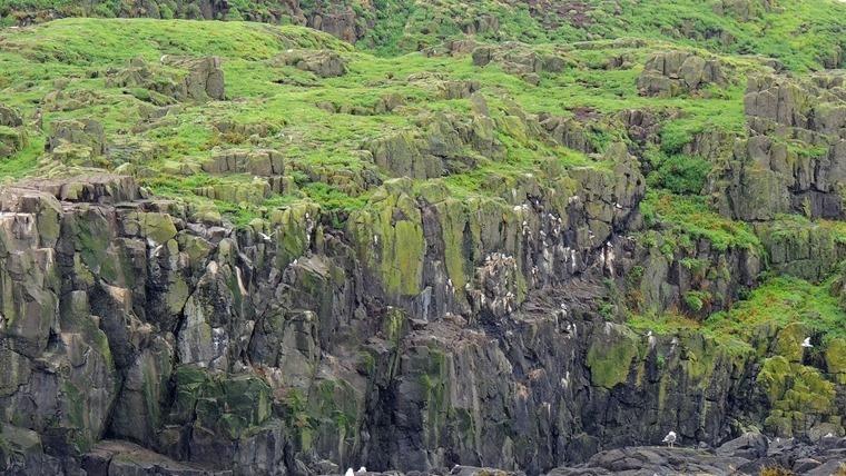 b2016-08-11 Isle of May 0032