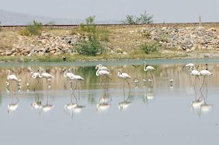 Sambhar lake - India