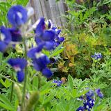 Gardening 2013 - 115_5994.JPG