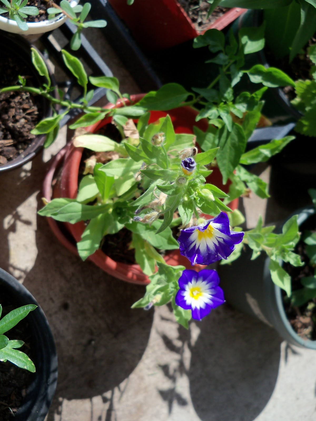 Gardening 2011 - 100_9951.JPG