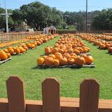 Pumpkin Patch 2015 - 12120030_10153209195652404_2310928181055791990_o.jpg