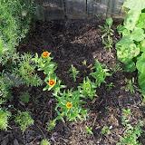 Gardening 2010, Part Two - 101_2875.JPG