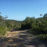 Walking along the trail south of Scopas Peak (375637)