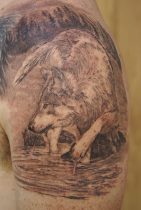 Keven's Wolf