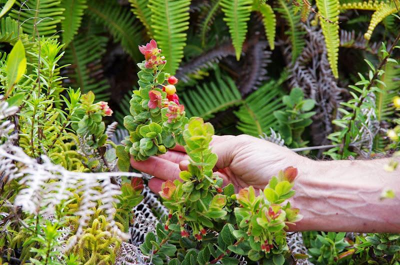 06-20-13 Hawaii Volcanoes National Park - IMGP7826.JPG