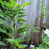 Gardening 2010, Part Two - 101_3317.JPG