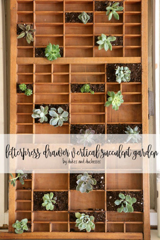letterpress-drawer-vertical-succulent-garden