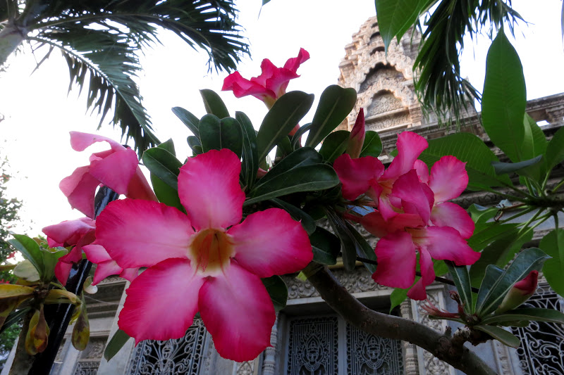 Pink flowers at Ouna Lom Pagoda