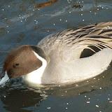 Livingston Ripley Waterfowl Conservancy - P1020541.JPG