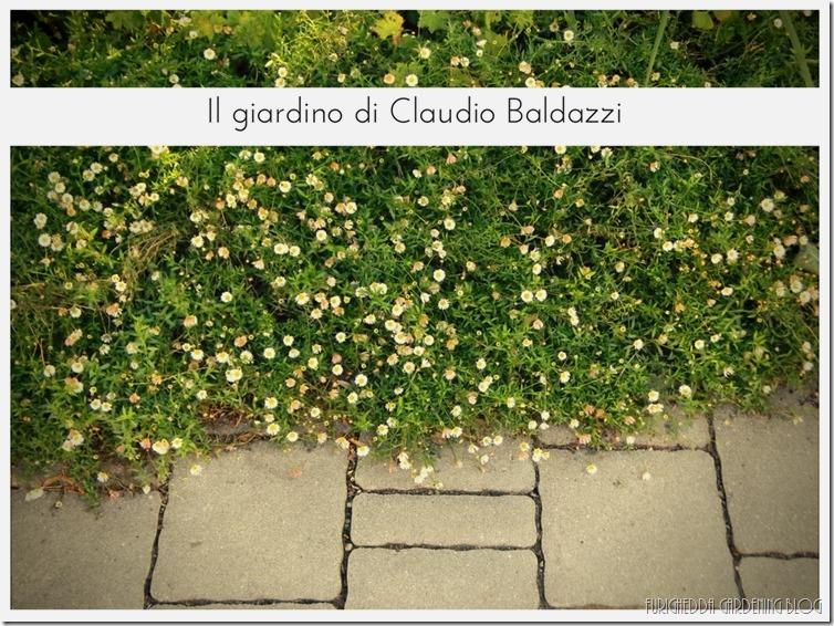 Il giardino di Claudio (22)