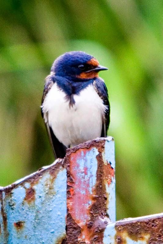 Vogels en dieren - IMG_9248.jpg