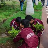 Gurukul Green Revolution (38).jpg