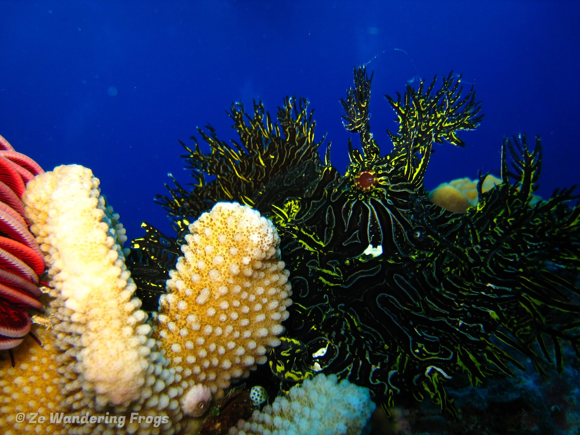 A Top Great Barrier Reef Liveaboard: TAKA Dive Boat Experience - Ze