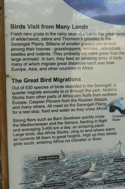 Serengeti National Park - bird sign