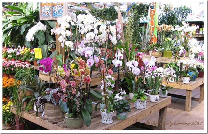 05-08-orchids2