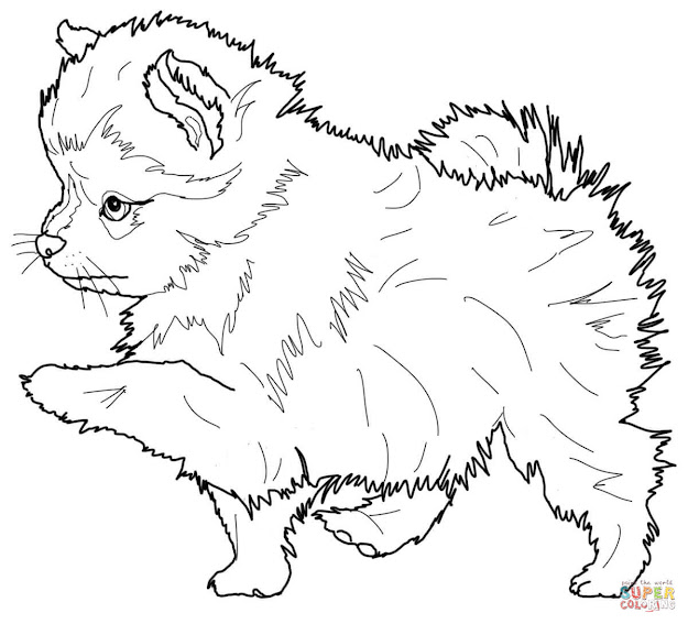 Realistic Puppy Coloring Page Free Download Printable Coloring