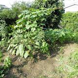 2010年7月20日の家庭菜園の様子