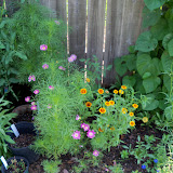 Gardening 2010, Part Two - 101_3352.JPG