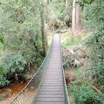 Suspension bridge over Narara creek (192116)