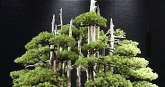 Top 10: Greatest Bonsai Trees.