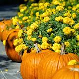 10-26-14 Dallas Arboretum - _IGP4300.JPG