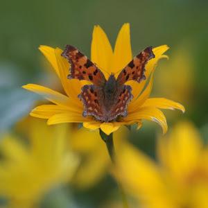 Czas motyli
