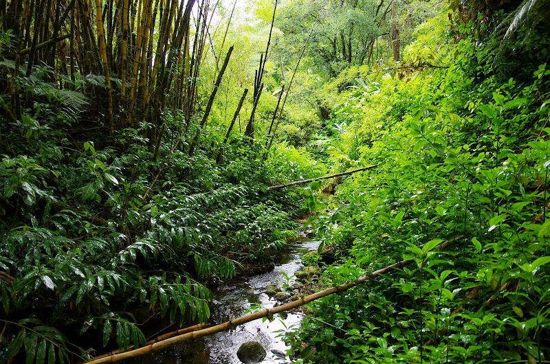 06-23-13 Big Island Waterfalls, Travel to Kauai - IMGP8837.JPG