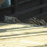 TIGERS Preservation Station - Myrtle Beach - 040510 - 12