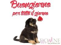 buongiorno-per-tutto-il-giorno-immagini-buongiorno-cane-rosa-rossa-buon-giorno.jpg