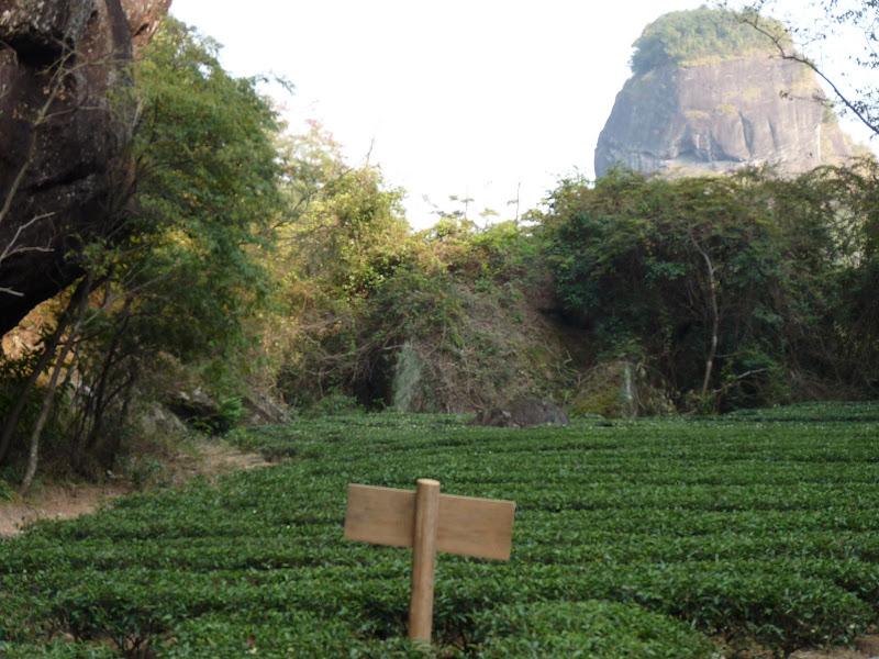 Chine .Fujian.Wuhi shan B - P1030353.JPG
