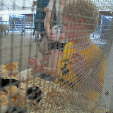 Fort Bend County Fair 2015 - 100_0320.JPG