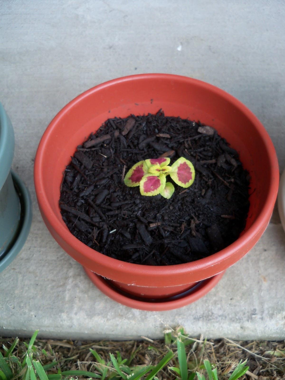 Gardening 2010, Part Two - 101_2760.JPG