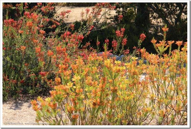 160813_UCSC_Arboretum_139