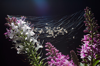 Photo: Spiderling Webs