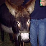 2005 - M5110138.JPG