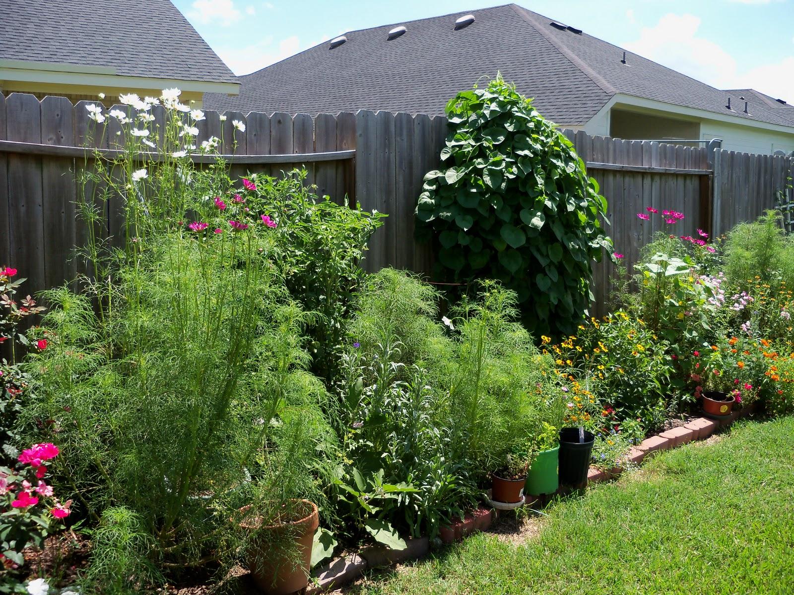 Gardening 2010, Part Three - 101_4448.JPG