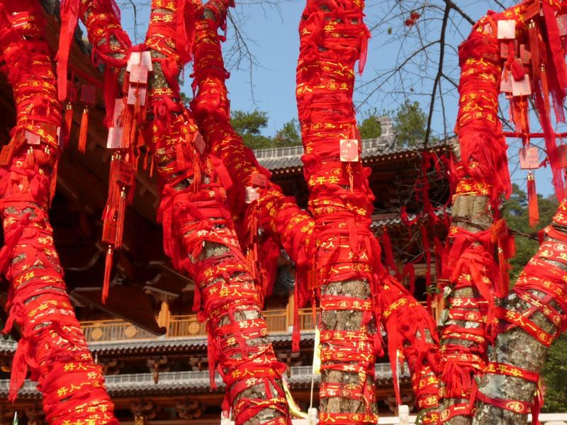 Chine .Fujian.Wuhi shan B - P1030336.JPG