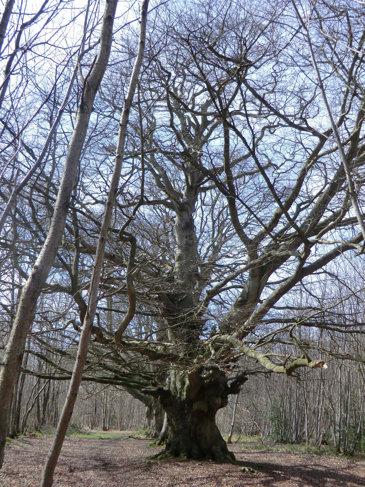 CIMG2512 Eggringe Wood