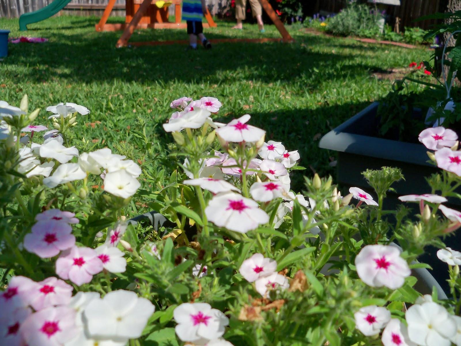 Gardening 2014 - 116_1545.JPG