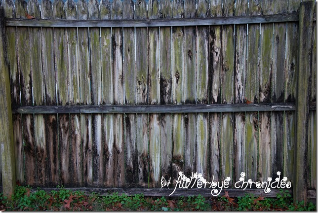 fave fence post & back drop in our yard January 16th