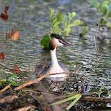 Vogels en dieren - IMG_9129.JPG