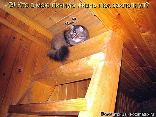 1423819028_kotomatricy-27