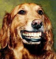 cachorro_sorrindo1