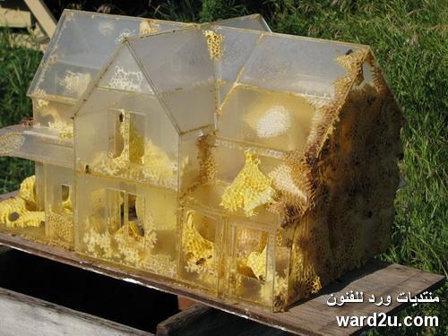 مجسمات فنية من شمع العسل برؤية الفنان Tomas Libertiny