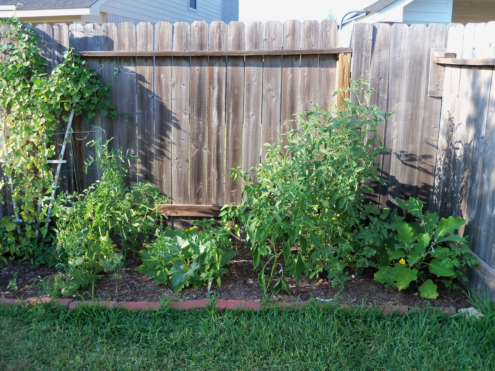 Gardening 2011 - 100_9211.JPG